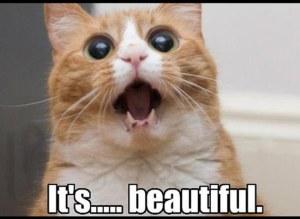 Xamarin Evolve 2016 - It's beautiful cat meme